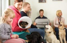 10 Lessons Learned from Pets in a Veterinary Hospital Waiting Room